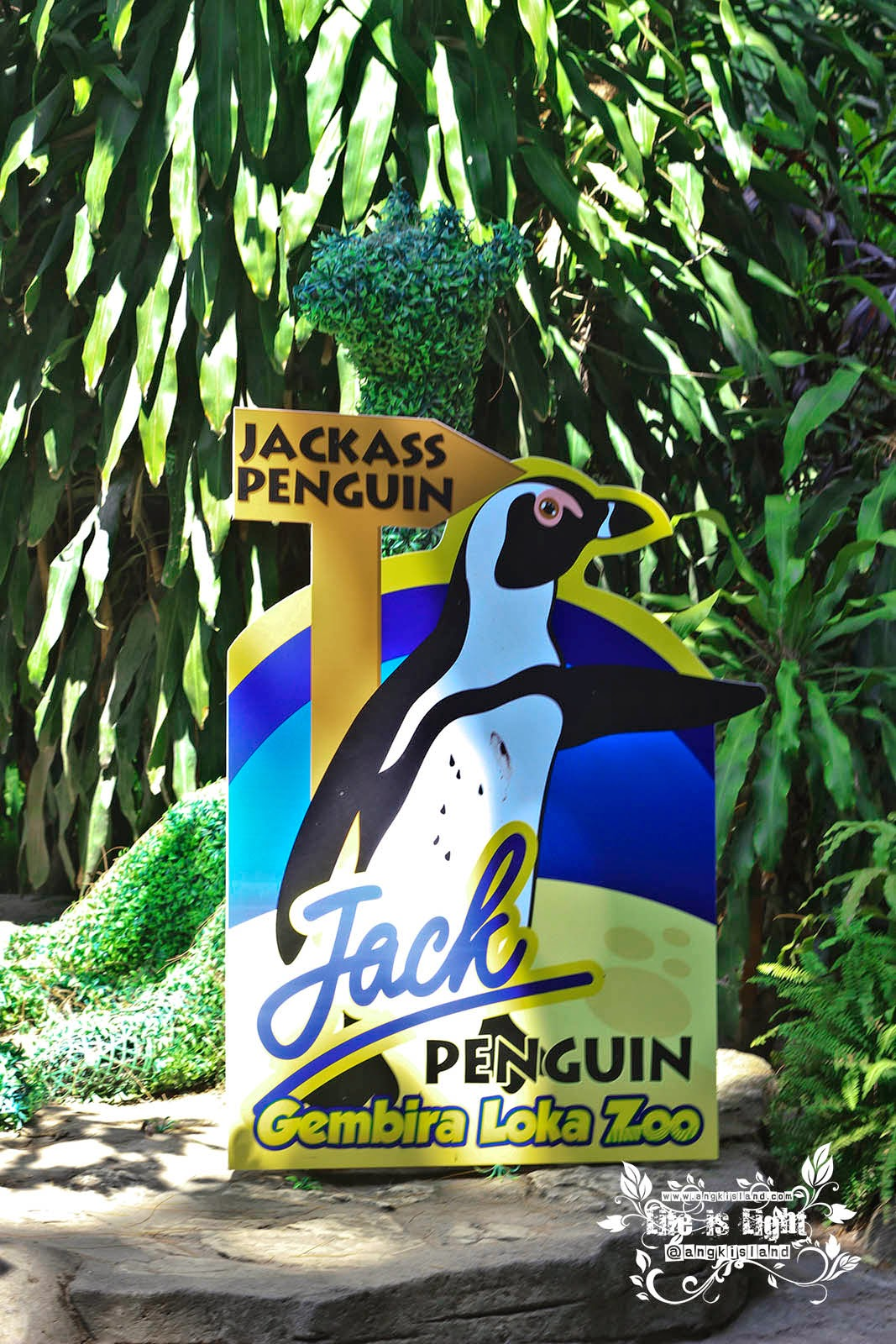 si jack ass penguin Gembiraloka
