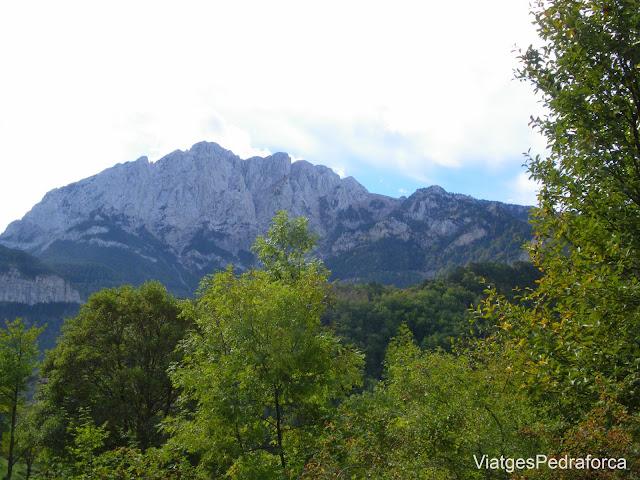 Bosc de Gresolet a la tardor Fageda Saldes Alt Bergueda Parc natural del Cadi-Moixero