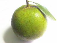 unripen orange