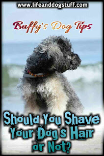 Things To Consider Before Shaving Your Dog