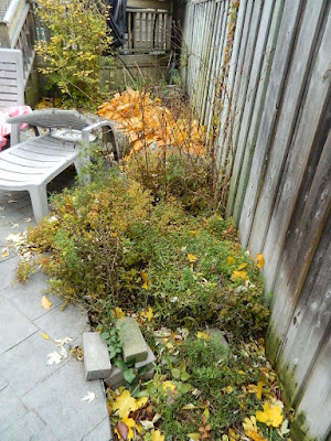 Toronto Fall Cleanup Before in Bedford Park by Paul Jung Gardening Services--a Toronto Garden Services Company