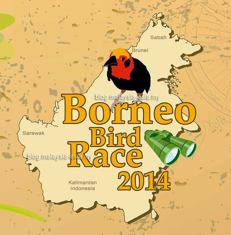 Bird Race in Borneo