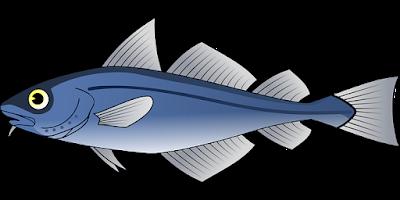 manfaat-ikan-tuna-bagi-kesehatan,www.healthnote25.com