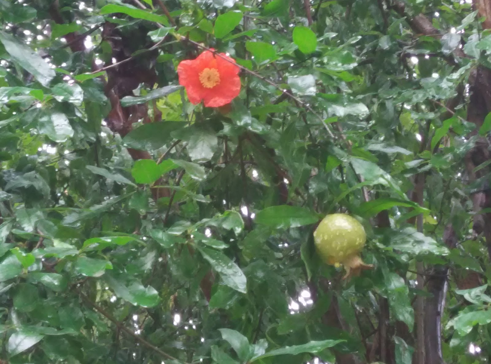 Visit Uttrakhand Rare Beautiful Flowers Can U Guess The Second
