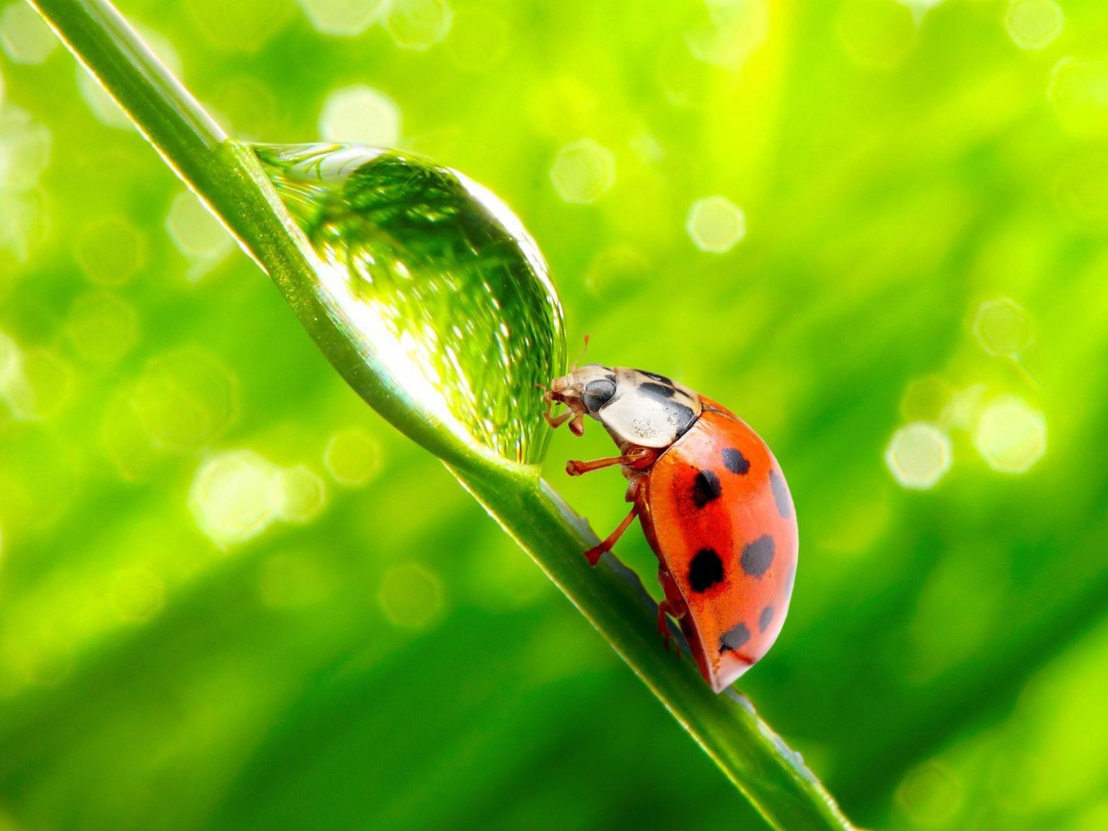 ladybug on leaf green blurred lights hd wallpaper   hd nature wallpapers