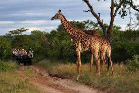 Travel African Safari,Free Important Fact For African Safari