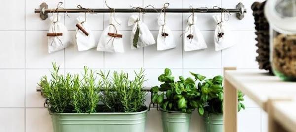 Feng shui c mo atraer la energ a positiva decoraci n for Plantas para la cocina segun feng shui