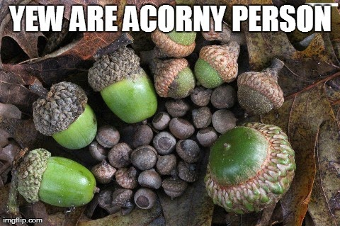 Yews don't have acorns... but that doesn't stop me from making puns