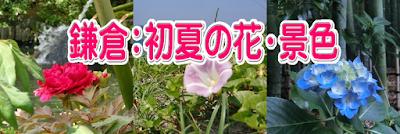 鎌倉:初夏の花・自然・景色