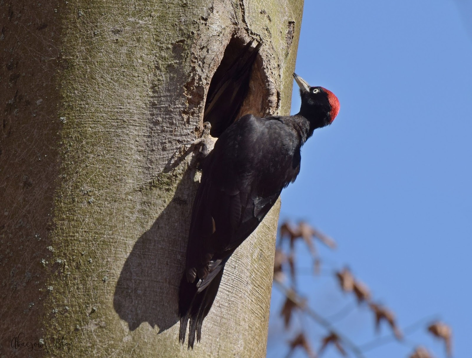 Leśne obserwacje ptaków - wiosna 2018 r.