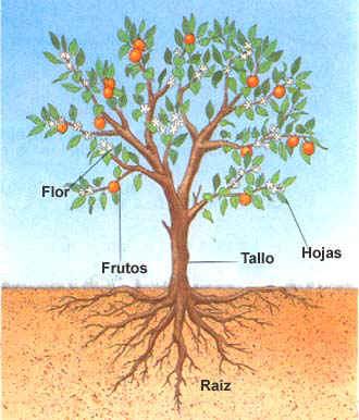 Plancha de piedra melchor saribel for Cuales son las partes de un arbol