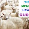 4 Tips Jitu Memilih Hewan Qurban Yang Baik, Jangan Salah Biar Qurbanya Berkah