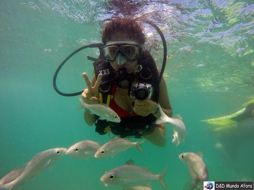 Mergulho em Maracajaú, Rio Grande do Norte - O que fazer em Maracajaú