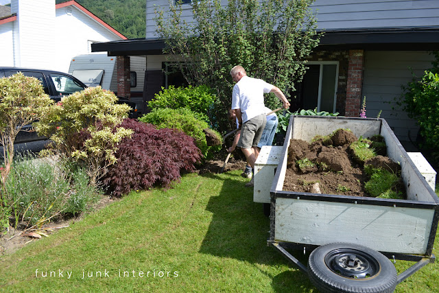 Digging out overgrown hedges and creating a curved flowerbed edge starts with removing the sod first.