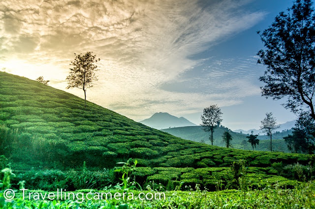 It's been quite some time, that Vibha and I visited Wayanad region of North Kerala but recently I realized that I never wrote a good Travel Guide about Wayanad and instead written smaller pieces about some of the main places to explore in this region or things to do.