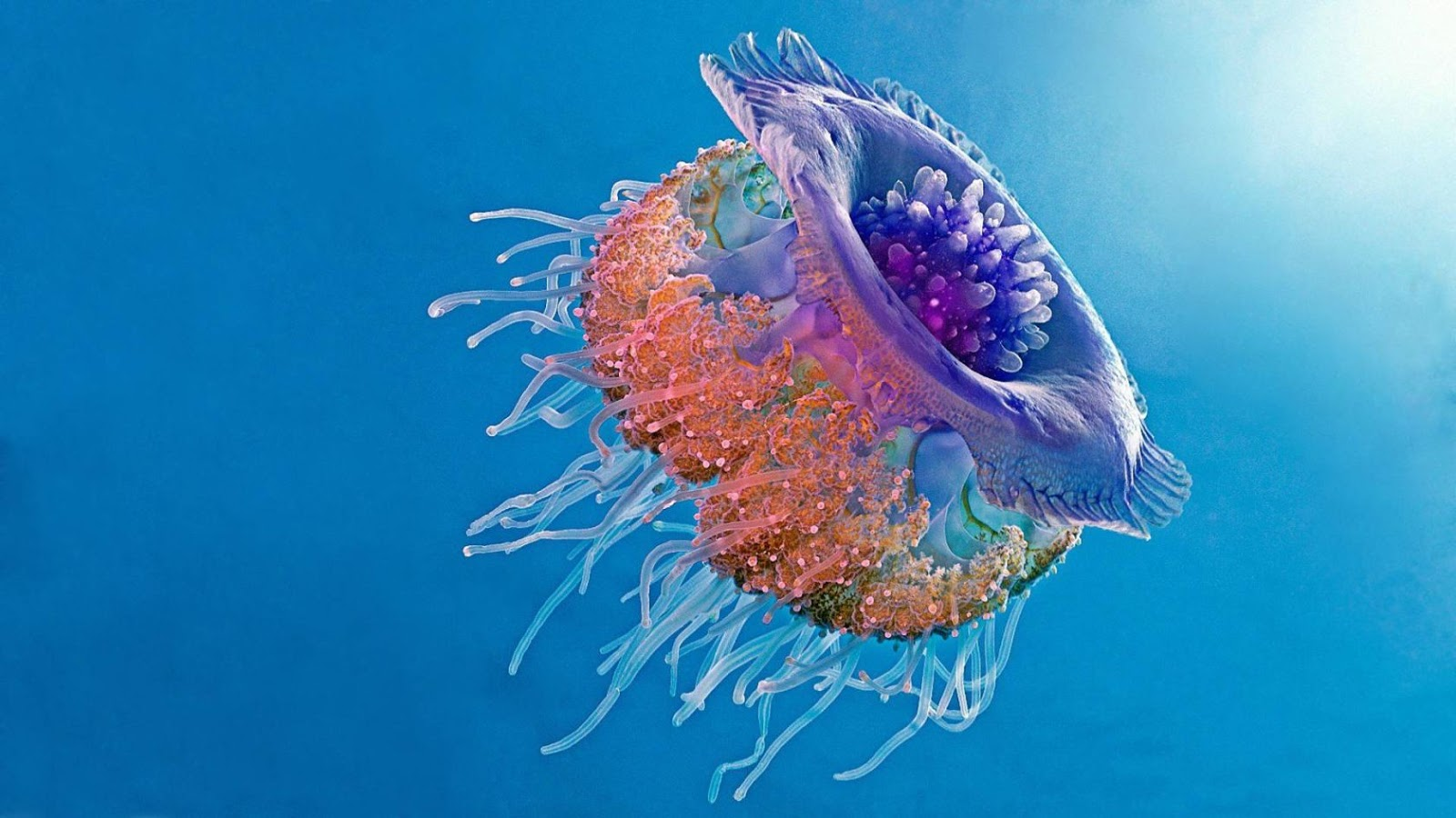 25 Amazing Jellyfish Facts for Kids and Grown Ups | All ...
