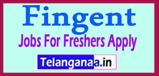 Fingent Recruitment Jobs For Freshers Apply