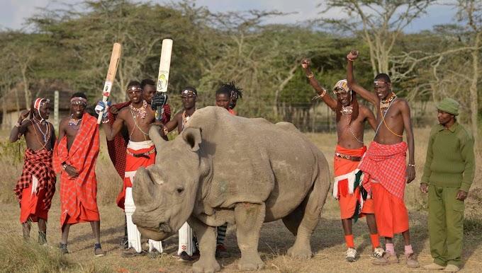 Morre Sudan, o último macho de rinoceronte branco do norte que restava no mundo