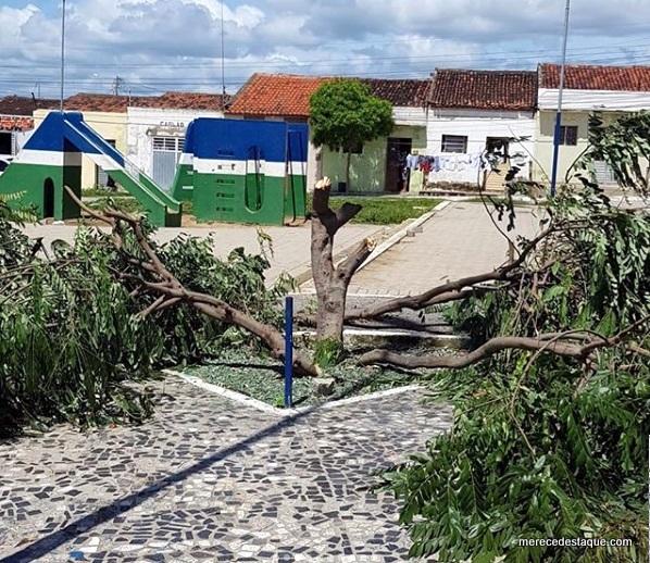 Padre é notificado por crime ambiental após corte de árvores em Santa Cruz do Capibaribe