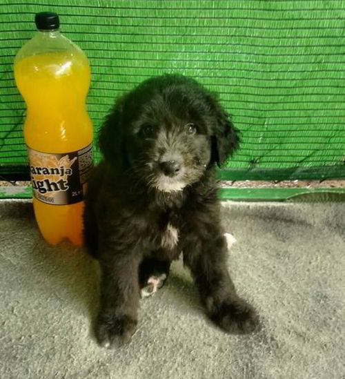 cachorro de tamaño mediano 1