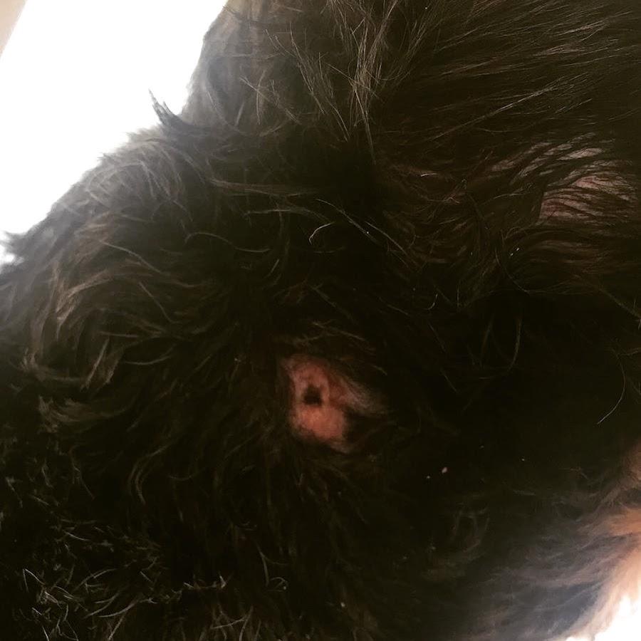 mordisco infectado perro