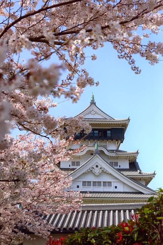 春爛漫 小倉城