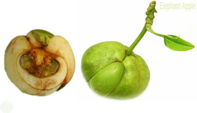 Elephant apple fruit,চালতা
