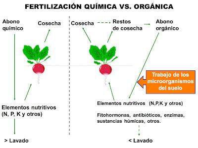 Tres componentes que afectan Dieta cetogénica
