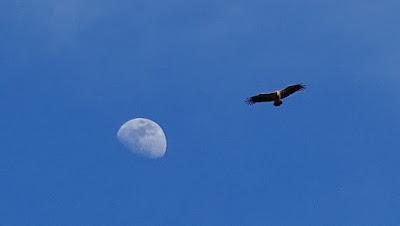 El rapaz y la luna Sierra de Guara