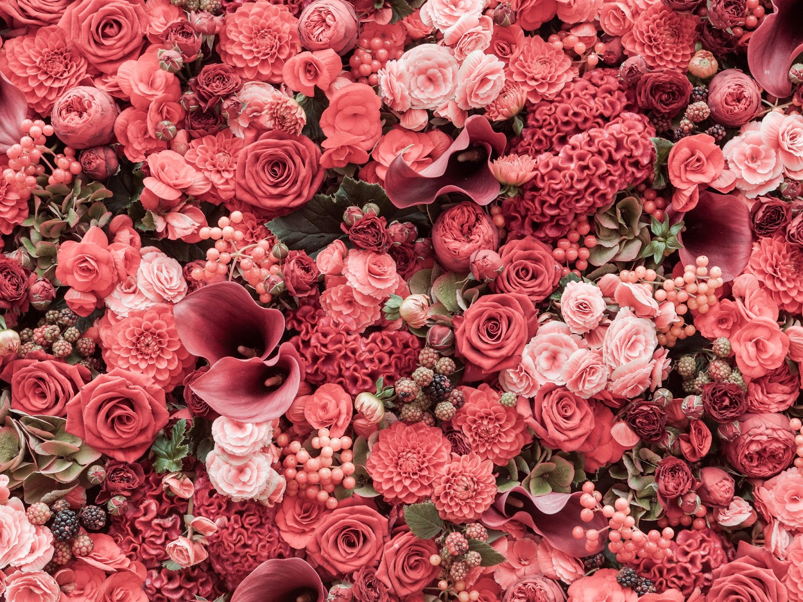 Send flowers to india flowers delivery in india flowers online india flowers are the most amazing and lovely creations which can easily grab the heart of people seeing them they are the fantastic constituent of mother nature izmirmasajfo