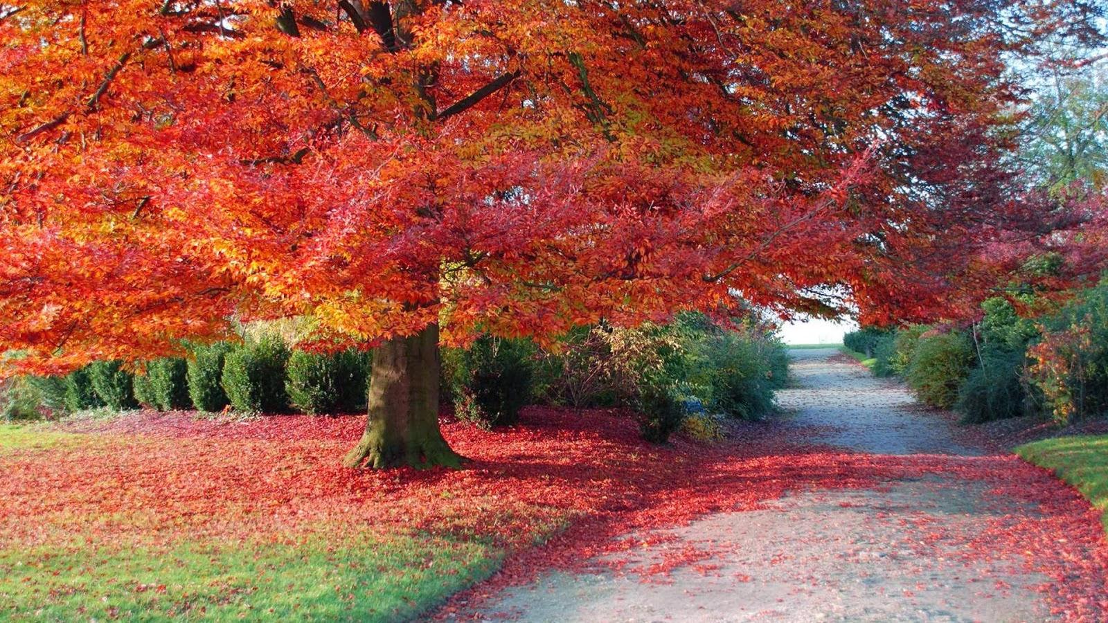 All Hot Informations: Download Autumn nature HD wallpaper ...