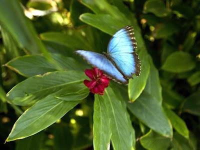 http://d.repubblica.it/lifestyle/2016/08/12/foto/the_butterfly_farm_farfalle_isola_aruba_insetti-3199270/1/?ref=HRLV-14