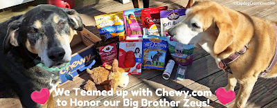 Tut & Sophie thank everyone who entered to win some of their big angel brother's favorite things! #Chewy #dogs #LapdogCreations ©LapdogCreations http://www.lapdogcreations.com/2016/03/winner-winner-chicken-dinner-chewy.html