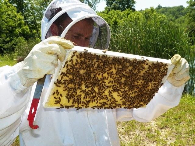 Γιατί δεν βάζουν μέλι τα μελίσσια μου ενώ του διπλανού τρελαίνονται στη συλλογή μελιού;