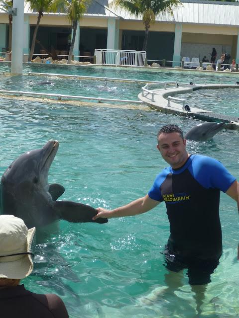 nadando com golfinhos