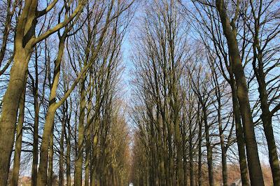 parc de Mariemont à Morlanwelz