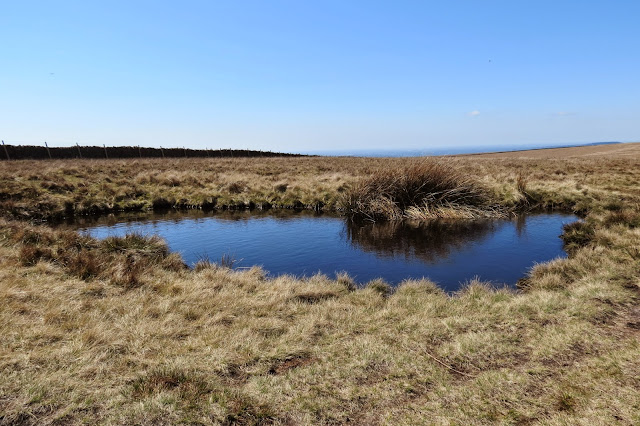 A pool of water reflecting the blue sky above, surrounded by coarse grass and rushes.