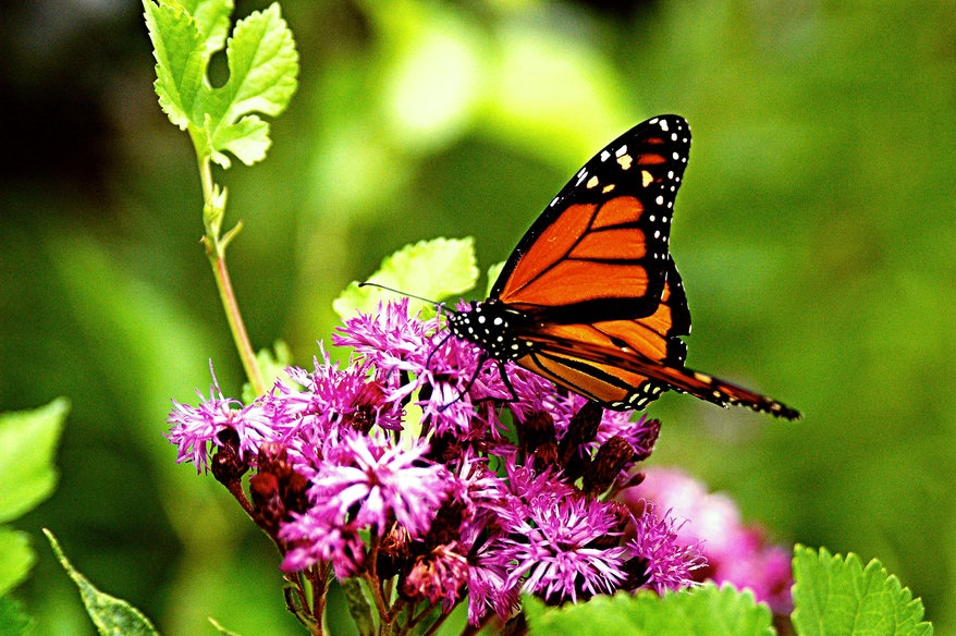 most beautiful flowers wallpapers butterflies - photo #6