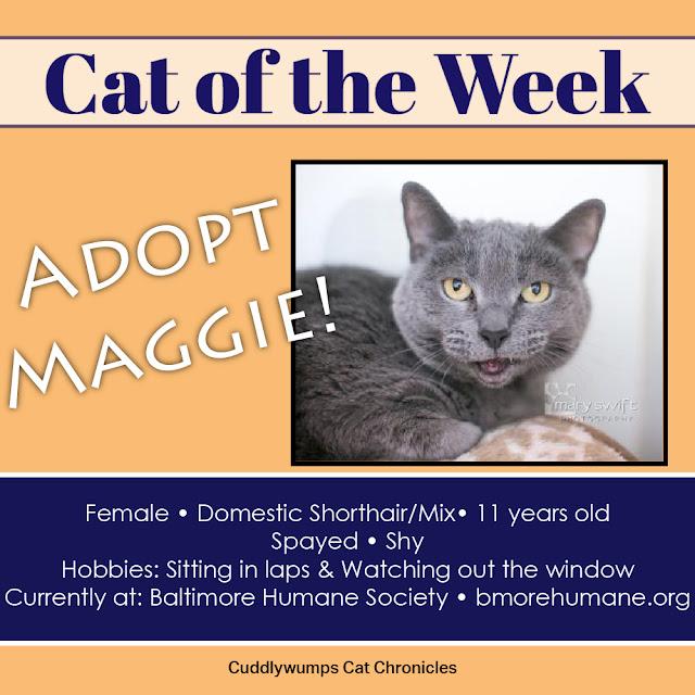 Adopt Maggie--Baltimore Humane Society