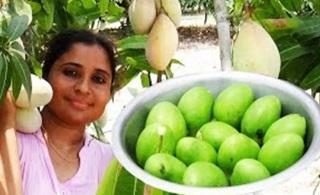 Andra Special Mango Pickles Recipe   South Indian Prepare Gunturi Mango Chutney   Raw Mango Pachadi