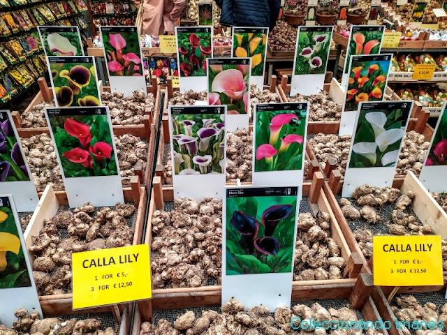 visitar el mercado de las flores en amsterdam