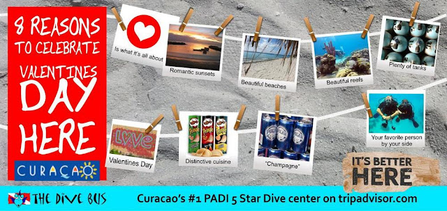 News From The Dive Bus Curacao 8 Reasons To Share The