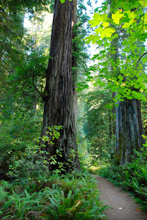 Revelation Trail Prairie Creek Redwood National and State Park California