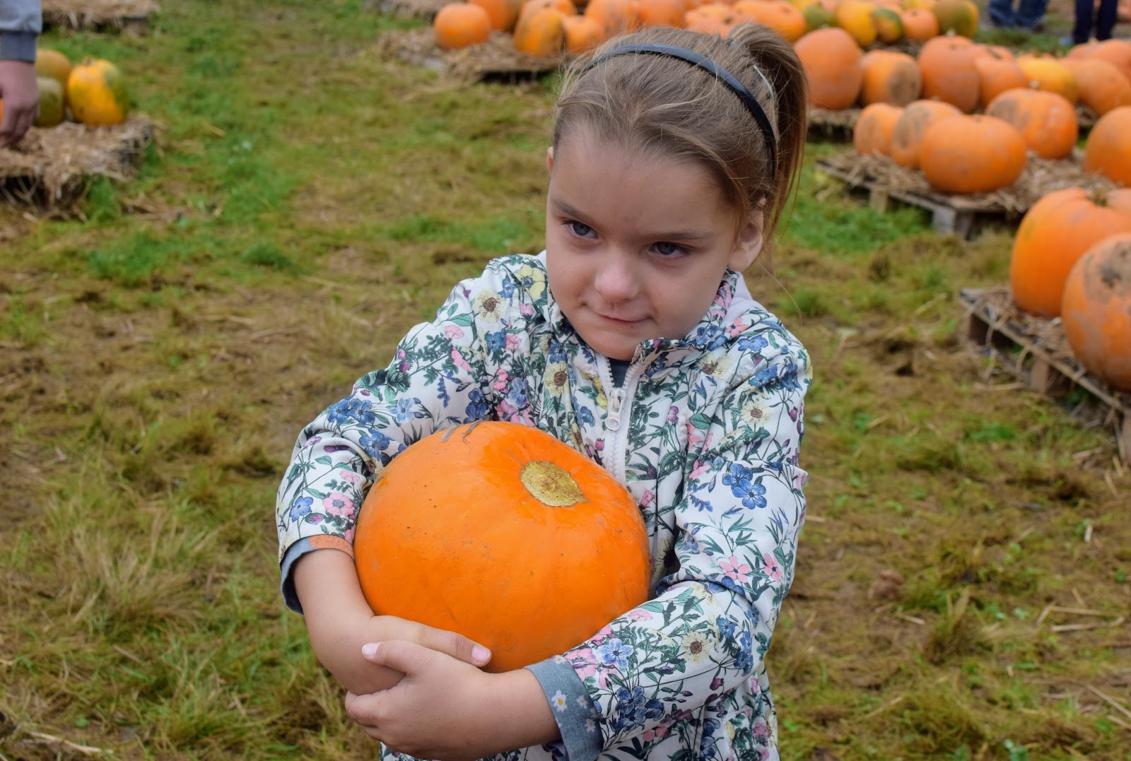 , Pumpkin Picking at Brooksgrove Farm, October 2017