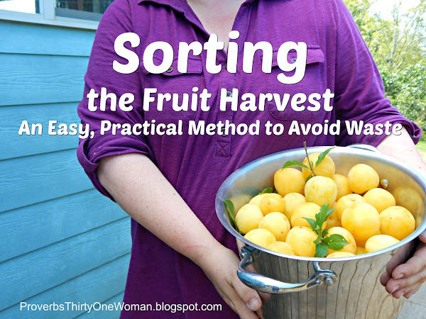Sorting the Fruit Harvest - An Easy, Practical Method to Avoid Waste