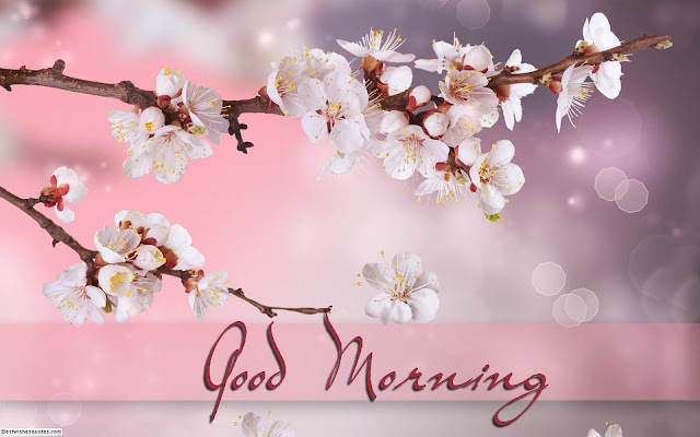 good morning wallpapers download