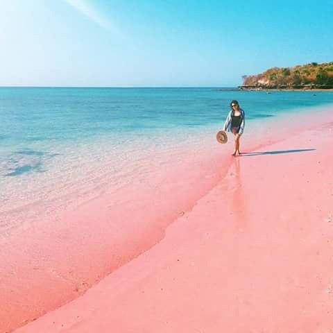 foto pantai pink di lombok ntb