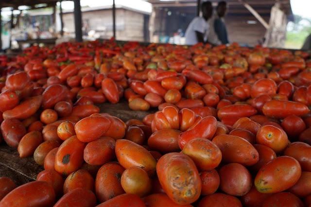 'Tomato Ebola' hits six states in Nigeria