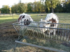 LACN - voyage - paris - ferme de paris - bois de vincennes
