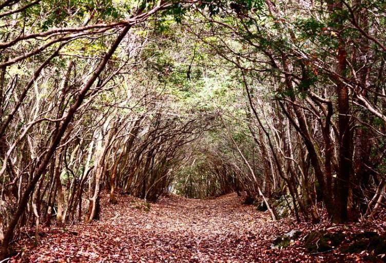 غابة الإنتحار أوكيغاهارا | اليابان